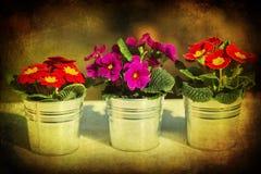 Det texturerade mörkret föreställer av tre blommakrukar Royaltyfria Foton