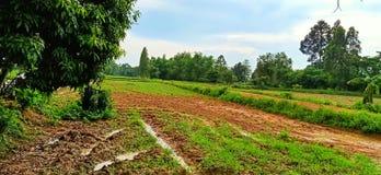 Det thailändska fältet fotografering för bildbyråer