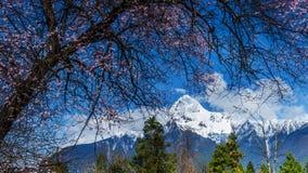 Det tibetana landskapet Fotografering för Bildbyråer