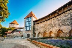 Det tidigare fängelsetornet Neitsitorn i gamla Tallinn, Estland Fotografering för Bildbyråer