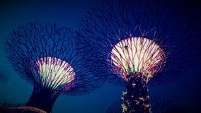 Det toppna dungeträdet Royaltyfri Foto