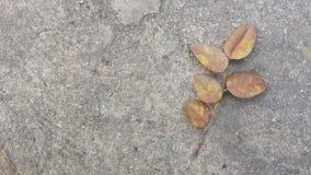 Det torkade bruna bladet faller ner på cement, det torkade som bruna bladet faller ner på cementbakgrund Arkivbild