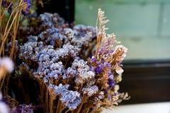 Det torra bladet och filialen blommar i vas, eller krukan i trädgårds- hemmastatt är t Arkivbild