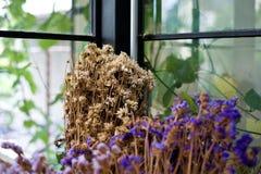 Det torra bladet och filialen blommar i vas, eller krukan i trädgårds- hemmastatt är t Arkivfoton
