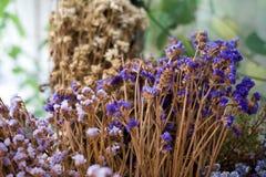 Det torra bladet och filialen blommar i vas, eller krukan i trädgårds- hemmastatt är t Royaltyfri Bild