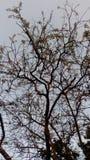 Det torra trädet ångar royaltyfria bilder