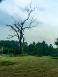 Det torra trädet i gräsplan parkerar Arkivbild