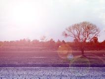Det torra trädet med solnedgångbakgrund, väljer fokusen med grunt djup av fältet: idealt bruk för bakgrund Arkivfoto