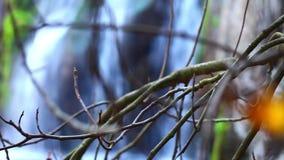 Det torra trädet och vattenfallet stock video