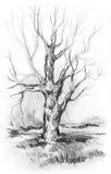 Det torra trädet utan sidor med skissar gräs royaltyfri illustrationer