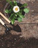 Det trädgårds- hjälpmedlet, skyffel, krattar och att bevattna kan, hinken, minnestavlor för plommoner Royaltyfri Fotografi