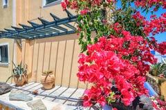 Det traditionella grekiska huset med bougainvillean blommar i Thira, Santorini, Grekland Royaltyfri Foto