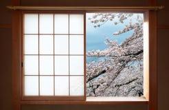 Det traditionella japanska glidningsfönstret och det härliga körsbärsröda trädet blomstrar royaltyfria foton