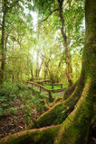 Det tropiska dimmiga rainforestlandskapet av utomhus- parkerar thailand Royaltyfri Fotografi