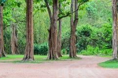 Det tropiska trädet Royaltyfri Fotografi