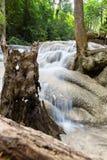 Det tropiska trädet rotar och vatten royaltyfria bilder
