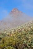 Det Tucson berget parkerar Arizona i dimma Arkivfoto