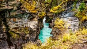 Det turkos färgade vattnet av den Athabasca floden, som den flödar till och med kanjonen Arkivfoto