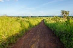 Det typiska afrikanska smuts- och gyttjaspåret med den höga elefanten gräs att växa på antingen sida, Gabon, centrala Afrika Arkivbilder