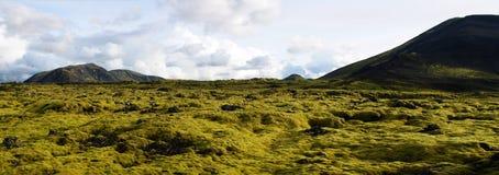 Det typiska landskapet av de spektakul?ra mossaf?lten av lava f?r Eldhraun mossabel?ggning vaggar i s?derna av Island royaltyfria foton