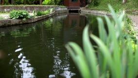 Det underbara konstgjorda dammet med liljor i stad parkerar Det konstgjorda dammet i stad parkerar lager videofilmer