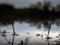 Det undervattens- skottet av gräs och växter doppade i klart vatten med massor av airbubbles och reflexion på under ytan Arkivfoto