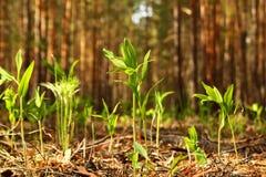 Det unga nya gröna gräset i en skog Fotografering för Bildbyråer