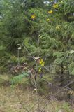 Det unga trädet förlorar lövverk royaltyfri foto