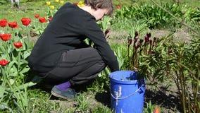 Det unga trädgårdsmästarekvinnaogräset mellan vårtulpan blommar stock video