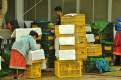 Det Unidentified folket packar grönsaken Arkivbilder