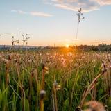 Det Urals landskapet Ryssland landskap Sällsynta härliga blommor arkivbild