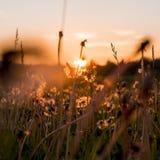 Det Urals landskapet Ryssland landskap Sällsynta härliga blommor Arkivfoton