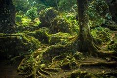 Det utarbetade trädet rotar arkivfoton