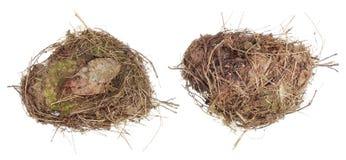 Det verkliga redet av en lös skogfågel göras av torrt gräs och mos Arkivfoto