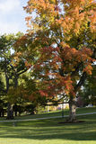 Det Vermont universitetet parkerar Royaltyfri Foto