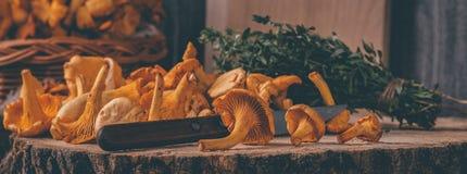 Det vide- magasinet med kantarellen plocka svamp på trätabellen Baktala, korgen med champinjoner och nya örter royaltyfri fotografi