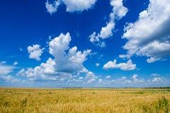 Det vidsträckta fältet av guld- mogen råg under en rik blå himmel royaltyfri foto