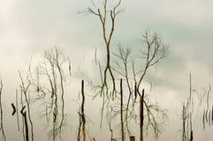 Det Vietnam landskapet som svävar huset, trädet reflekterar Arkivfoto