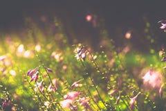 Det violetta slutet blommar upp suddig bakgrund Arkivbilder