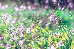 Det violetta slutet blommar upp suddig bakgrund Royaltyfri Foto