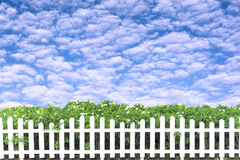 Det vita staketet dekorerade med gröna träd och blå himmel Fotografering för Bildbyråer