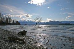 Det Wanaka träd, Nya Zeeland Arkivbild