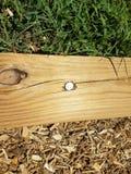 Det Wood brädet med ett nummer 20 spikar i det Arkivfoton