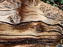 Det Wood skället krullade och bruten kräm och beiga Arkivfoton