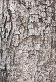 Det Wood skället texturerar Royaltyfria Bilder