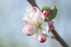 Detaail della primavera Immagini Stock Libere da Diritti