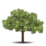 Detached tree with green leaves Royalty Free Stock Photo