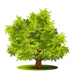 Detached tree with green leaves stock illustration