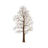 Detached tree without leaves,  illustrations Royalty Free Stock Photos