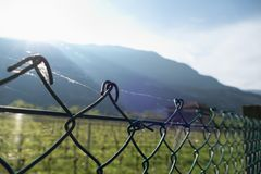 Detai lof a fence wit a spoder web Stock Images